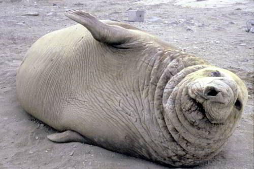Какие виды животных самые крупные на Земле - список, характеристика и фото 7