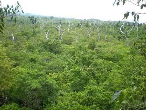 верхний ярус леса