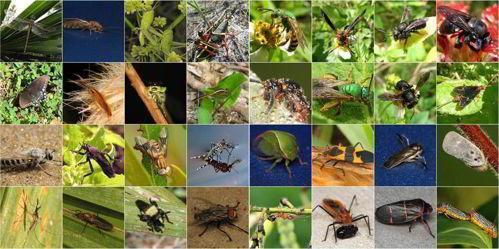 насекомые, членистоногие, коллаж, фото