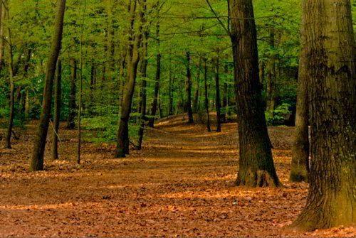 Естественная (природная) экосистема - описание, признаки, виды и примеры 6
