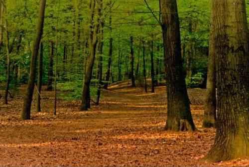 контрастность умеренного леса