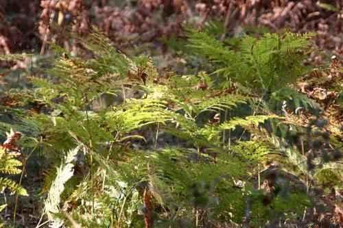 кустарники в лесу