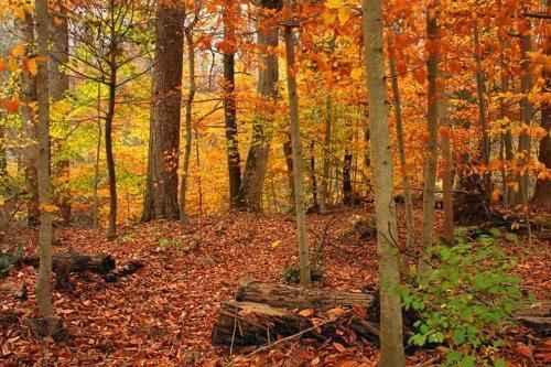 осень в лесу умеренного климата