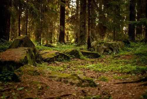 подстилка леса