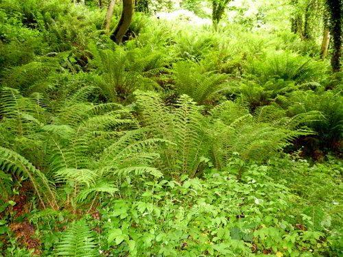 трава в лесу