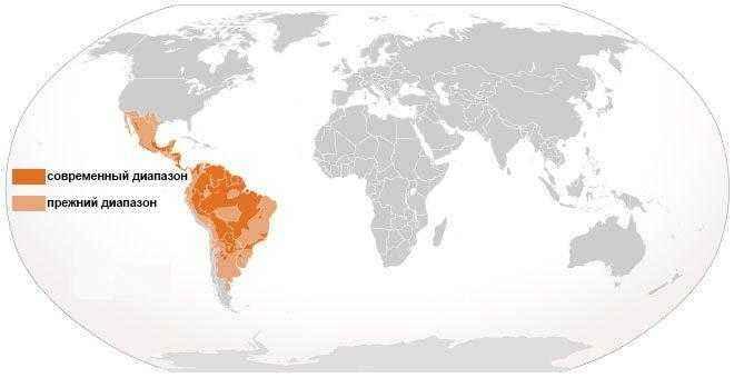 ареал-обитания-ягуаров