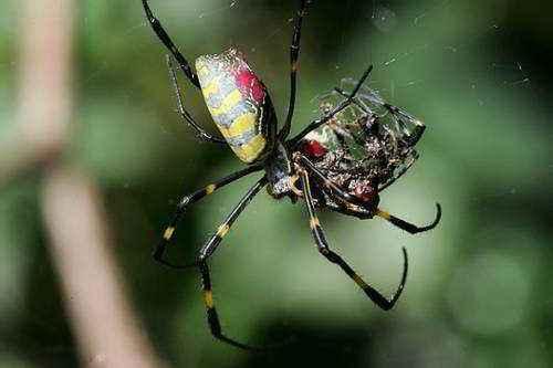 питание паукообразных