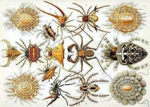 паукообразные-отряды