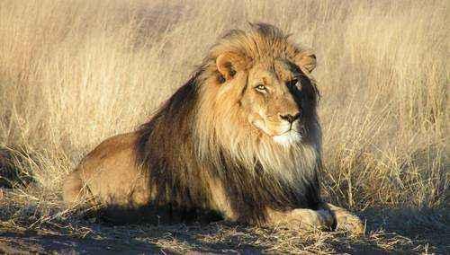 Характеристика, животный и растительный мир саванны Африки 9
