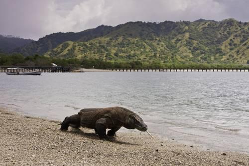 чудеса природы - Остров Комодо