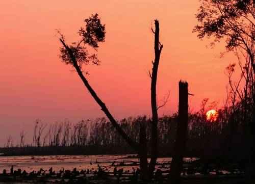 чудеса природы - Сундарбан