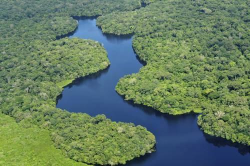 чудеса природы - амазонские дождевые леса