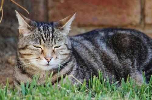 явления природы - Кошачье мурлыканье