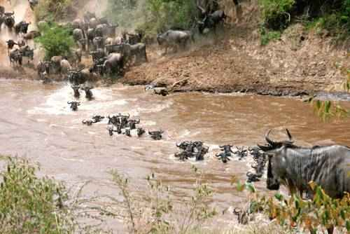 явления природы - Миграции животных
