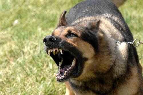 Агрессия, злая собака,