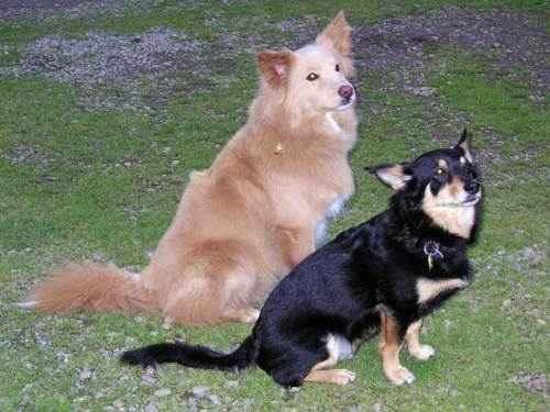 две собаки, сидят