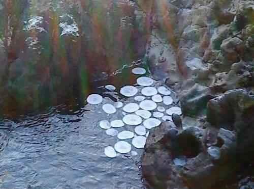 явления природы - Ледяные круги