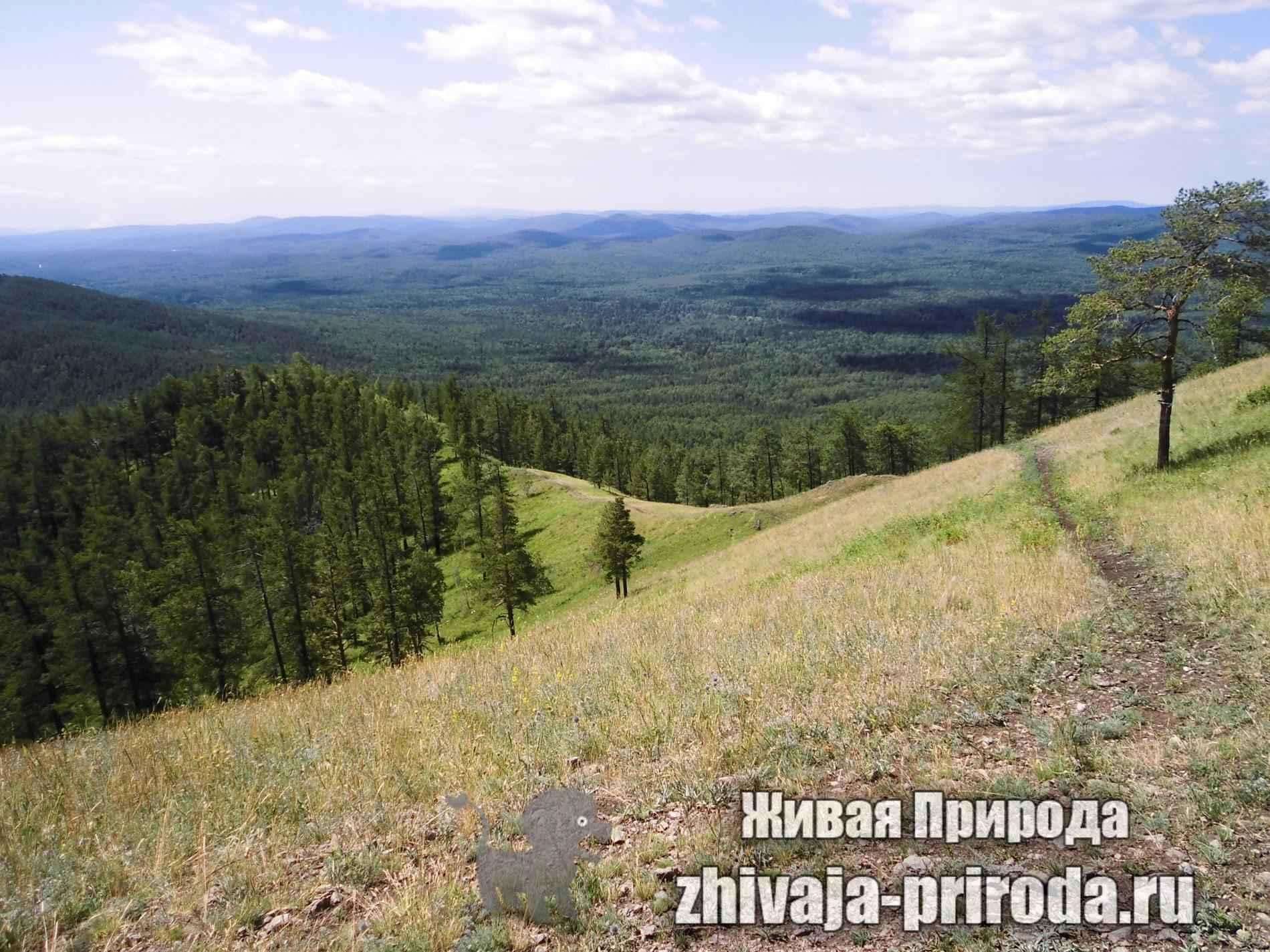 фото-гора-Егоза,-южный-урал
