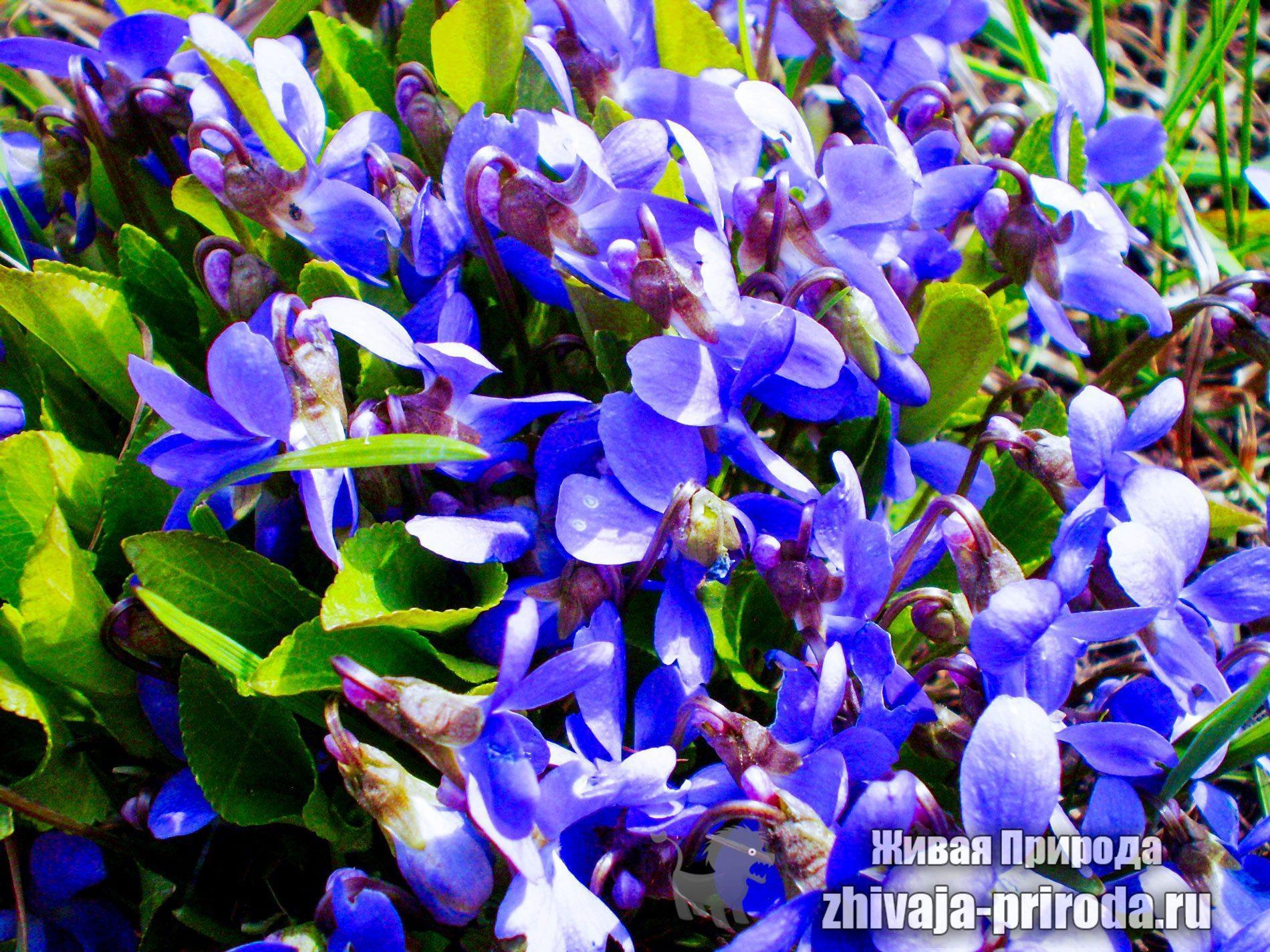 фото-первых-весенних-цветов