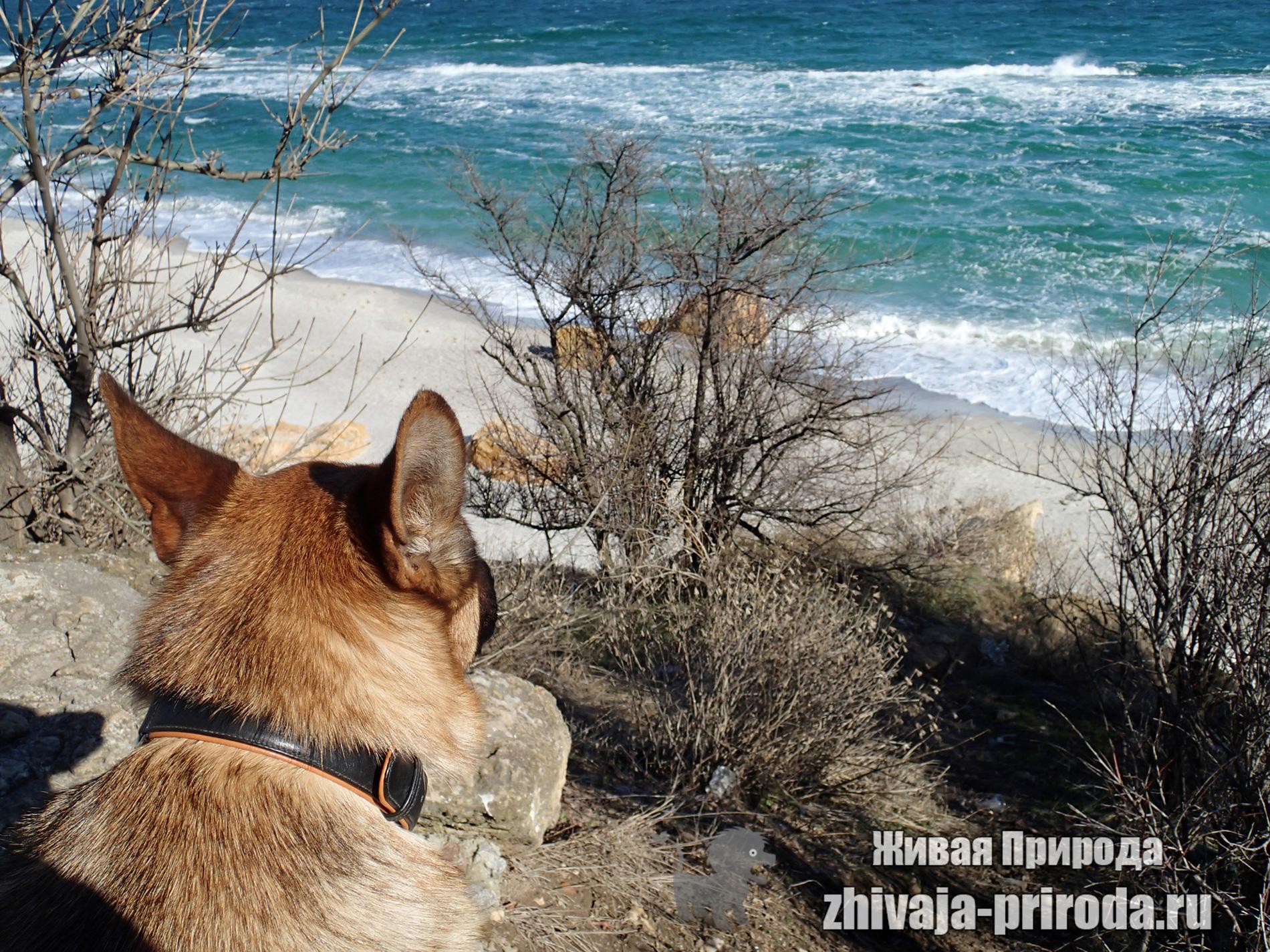 фото-пса-у-моря