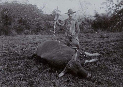 Бантенг, мертвый дикий бык, охотник