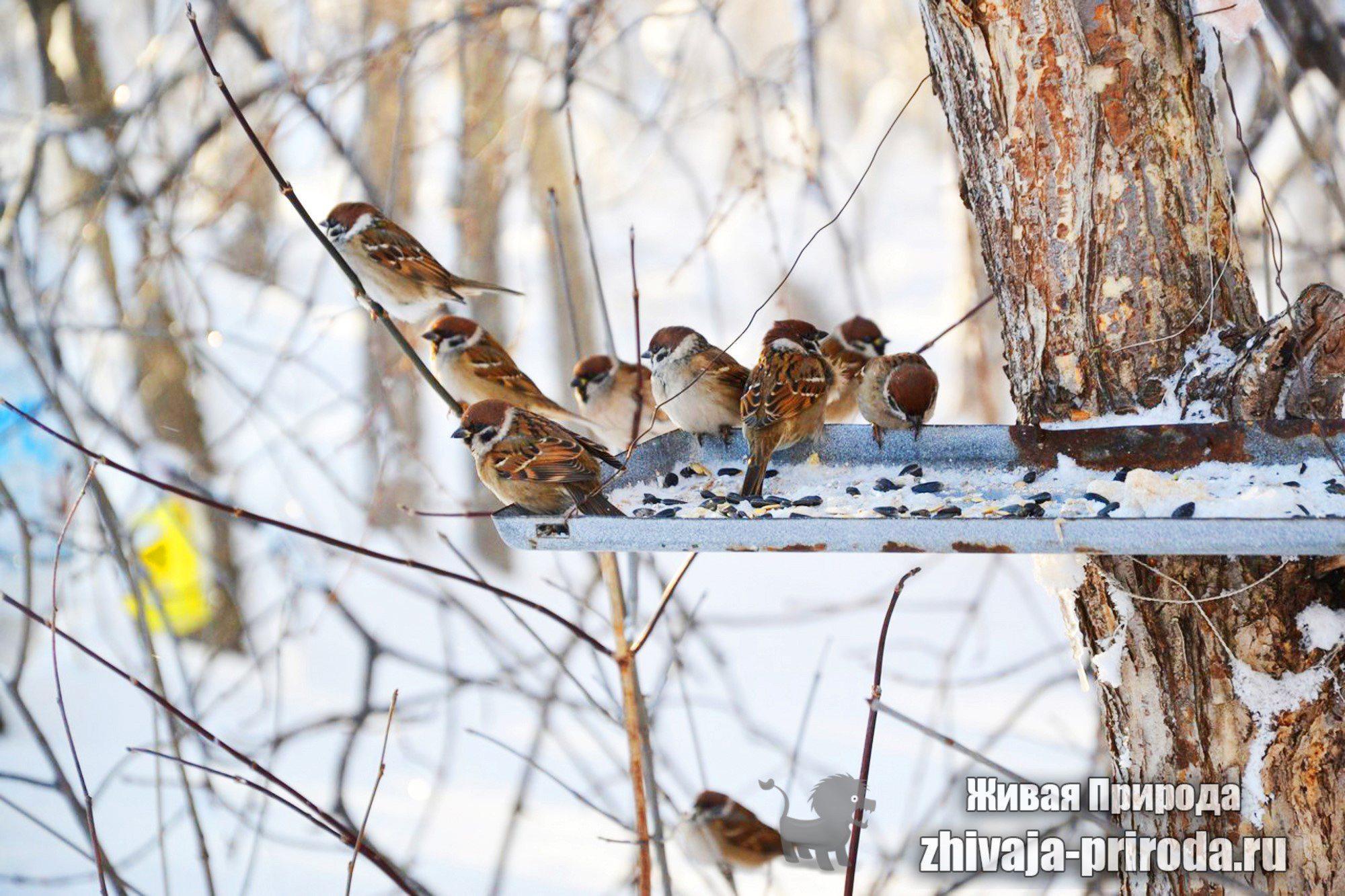 Отряды класса птиц - список, названия, фото и краткое описание 8