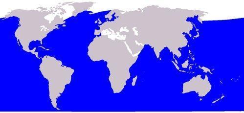 Сейвал, как сайдяной кит, или ивасёвый кит - ареал