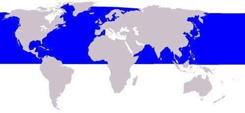 кит малый полосатик, ареал, карта