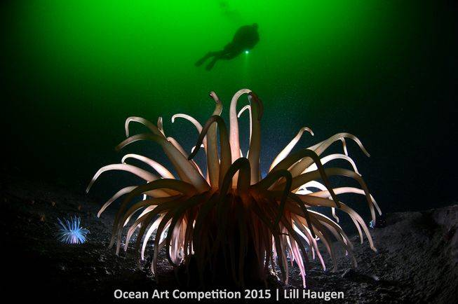 coldwater-ocean-art-2015-lill-haugen.jpg.653x0_q80_crop-smart