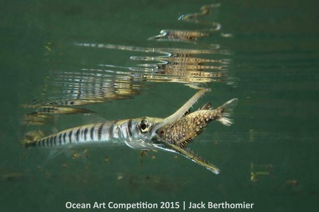 compact-marinelifebehavior-ocean-art-2015-jack-berthomier.jpg.653x0_q80_crop-smart