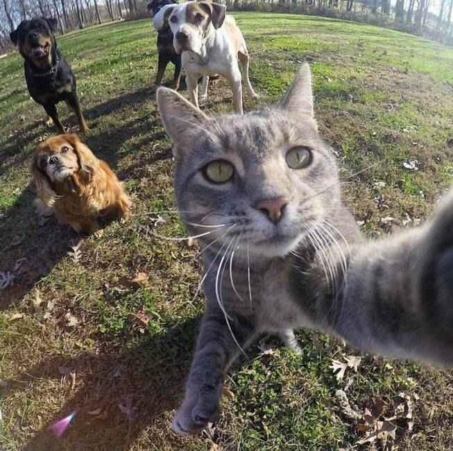 manny-selfie-cat-01.jpg.653x0_q80_crop-smart