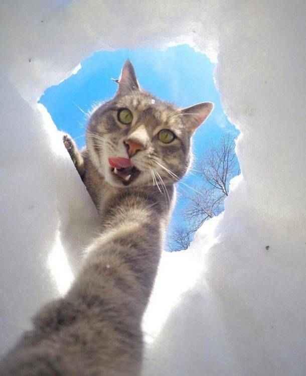 manny-selfie-cat-02.jpg.653x0_q80_crop-smart