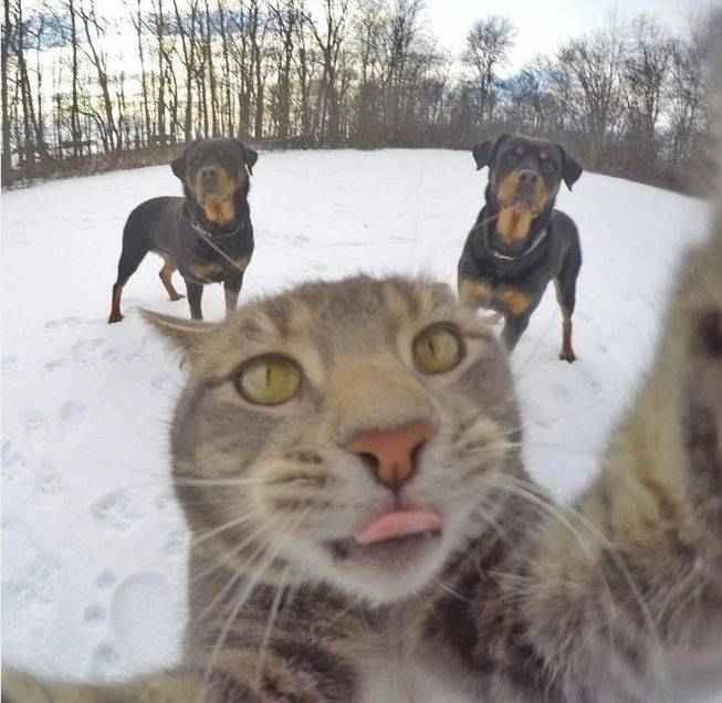 manny-selfie-cat-03.jpg.653x0_q80_crop-smart