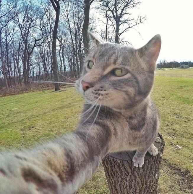 manny-selfie-cat-04.jpg.653x0_q80_crop-smart