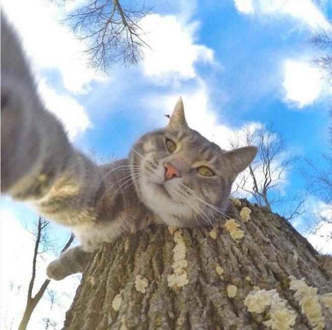 manny-selfie-cat-05.jpg.653x0_q80_crop-smart