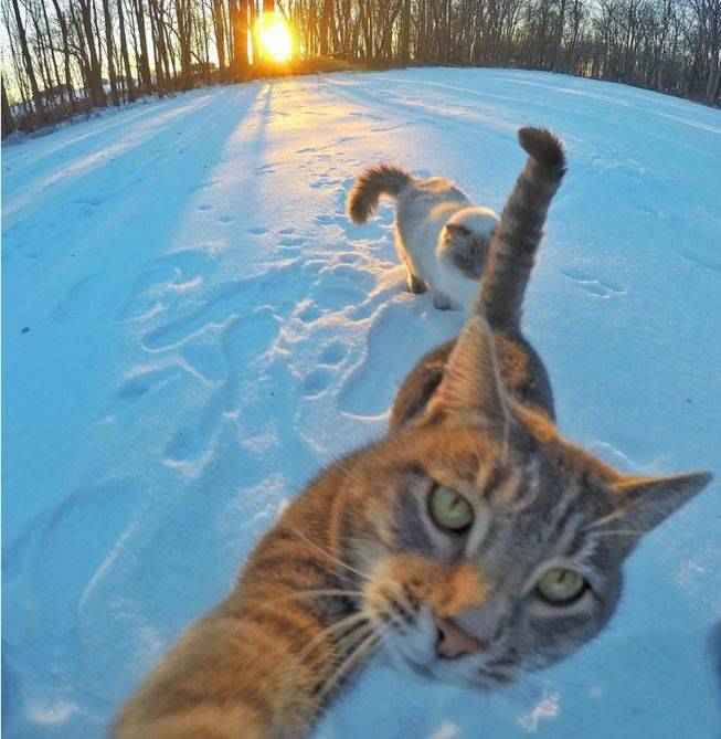 manny-selfie-cat-06.jpg.653x0_q80_crop-smart