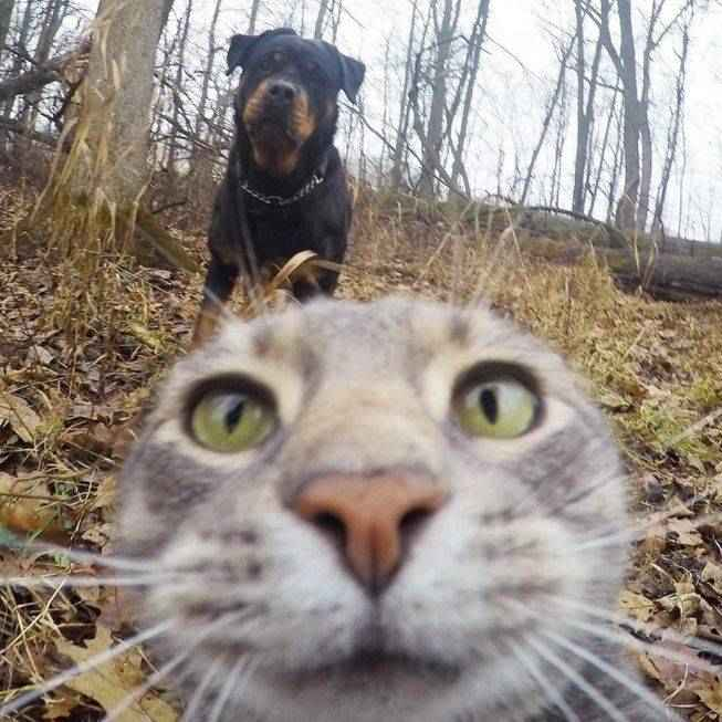 manny-selfie-cat-07.jpg.653x0_q80_crop-smart
