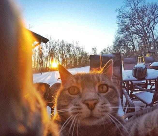 manny-selfie-cat-08.jpg.653x0_q80_crop-smart