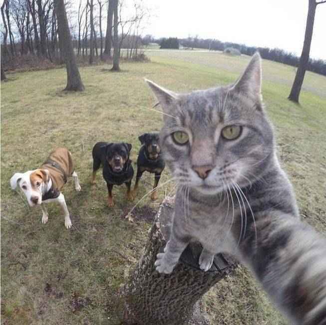 manny-selfie-cat-09.jpg.653x0_q80_crop-smart