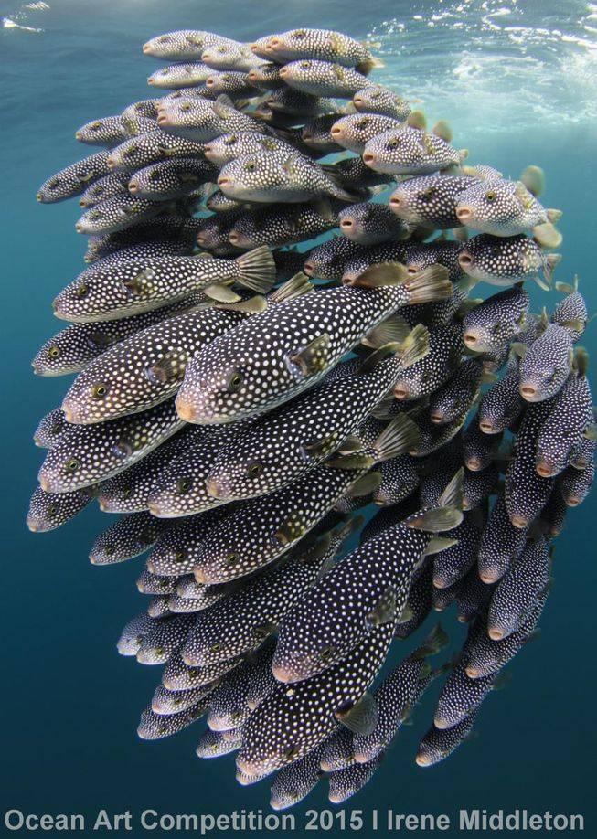novicedslr-ocean-art-2015-irene-middleton.jpg.653x0_q80_crop-smart