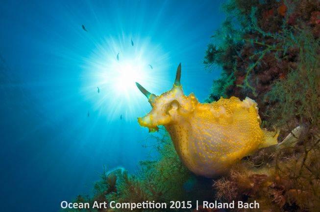 nudibranches-ocean-art-2015-roland-bach.jpg.653x0_q80_crop-smart