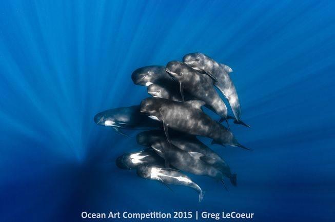 portrait-ocean-art-2015-greg-lecoeur.jpg.653x0_q80_crop-smart
