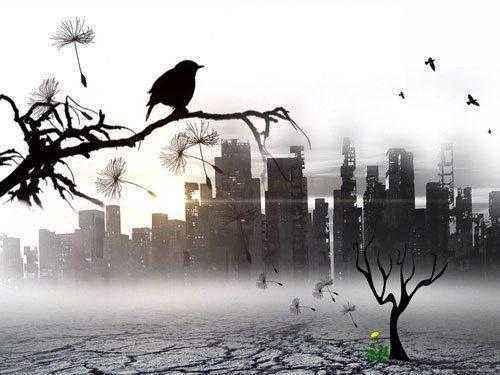 городские-птицы