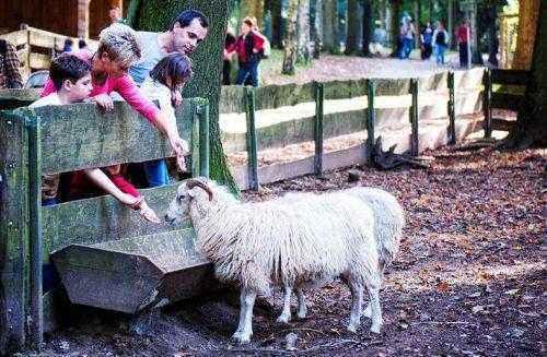 посетители парка Hundshaupten кормят животных