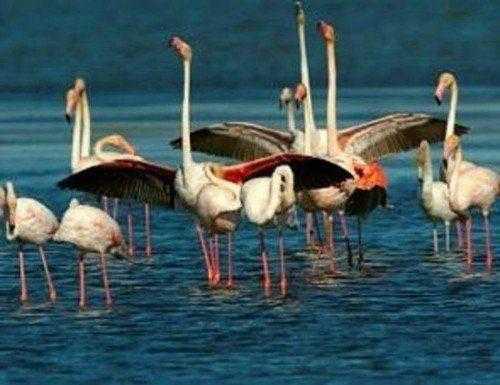 фламинго в Дельте реки Эбре
