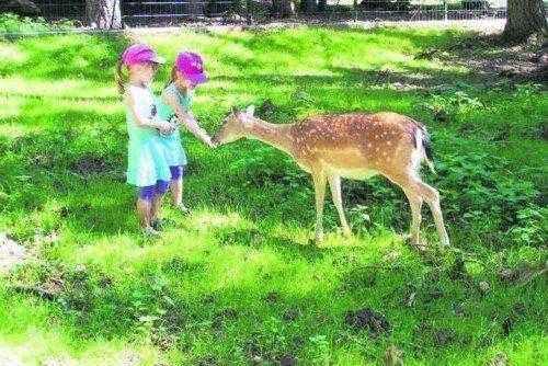 посетители парка Hundshaupten кормят оленя