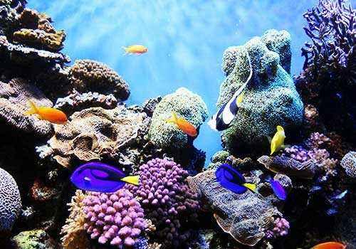 риф, кораллы, рыбы, подводный мир, защита, охрана, моря, океаны