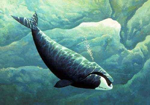 гренландский кит, полярный кит, под водой, рисунок