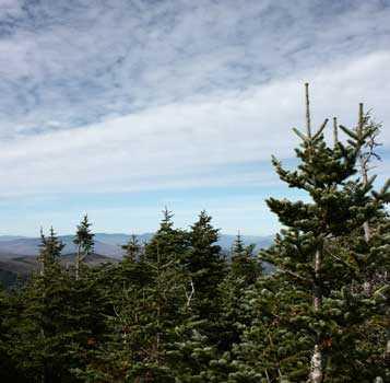 Пихта бальзамическая, небо, облака деревья, лес