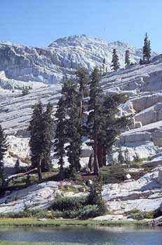 горы, склон, скалы, деревья, тсуга